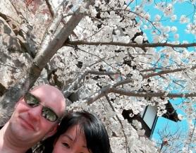 beginn sakura, matsumoto castle (2)