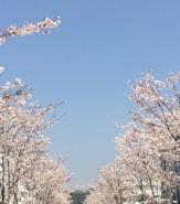 kamakura (7)