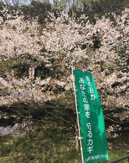 kamizoroi yama, hanami (2)