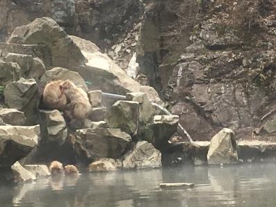 Jigokudani monkey onsen
