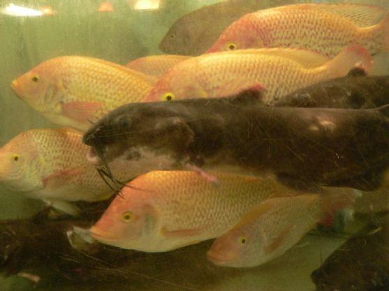 market fish variations (3)