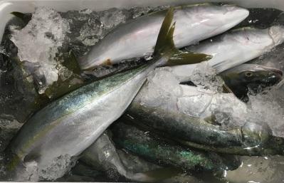 market fish variations (4)