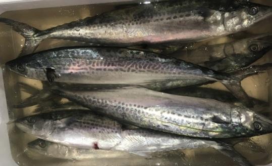 market fish variations (5)