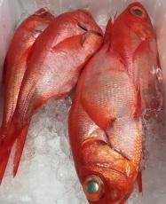 market fish variations (6)