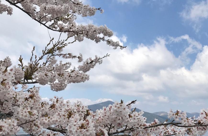 late-sakura-ashinoko-lake-hakone-2019-1